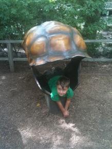 Children's Zoo Turtle Shells