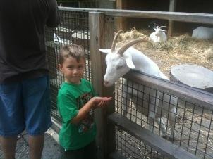 Children's Zoo Feeding the Goats