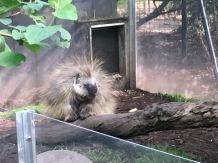 Children's Zoo Porcupine