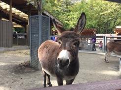 Children's Zoo Donkey