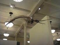 Scary prehistoric creature
