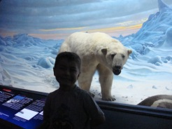 Hall of Ocean Life, Polar Bear