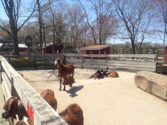 Hungry goats