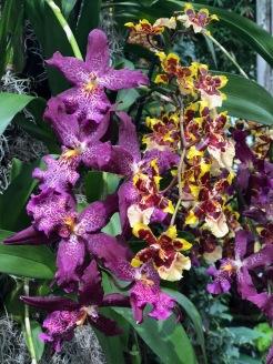 Botanical44