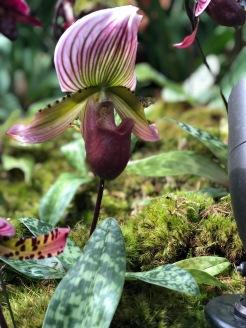 Botanical85