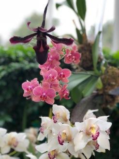 Botanical86