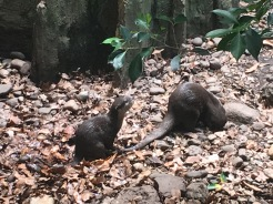 Baby Claw Otter in Jungleworld