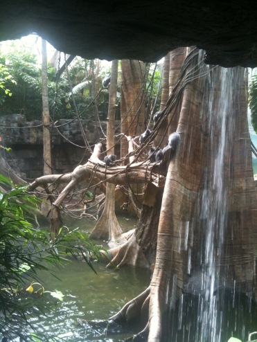 Great exhibit in Jungleworld. Can they even see us behind the waterfall in the dark?