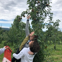 Man lifting woman to reach an apple at top of tree in orchard at Fishkill Farms, New York