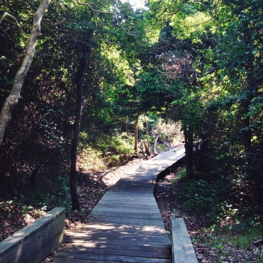 walking into the Sunken Forest, boardwalk through the trees, Fire Island