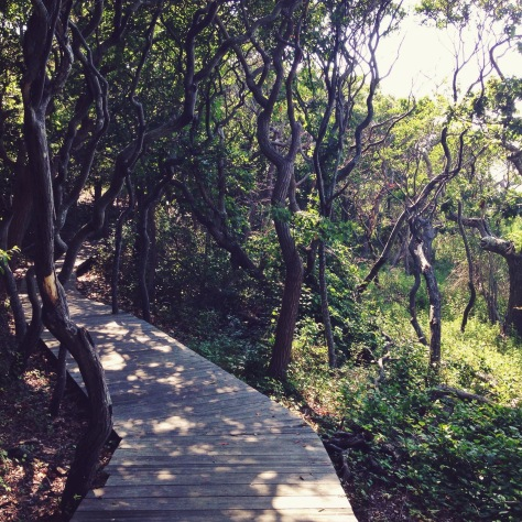walking into the Sunken Forest, Sailor's Haven, Fire Island