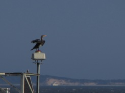 Cormorant on top of a buoy in Great South Bay, Long Island