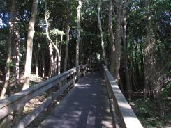 boardwalk into the Sunken Forest from Sailor's Haven, Fire Island