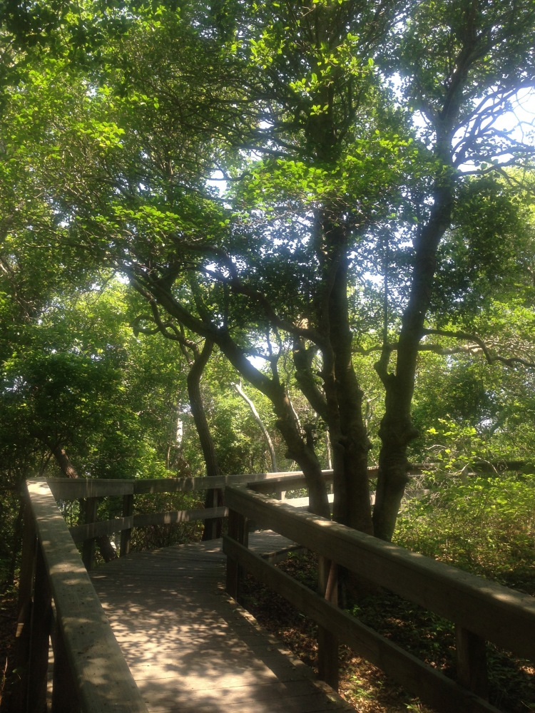 boardwalk through the primeval forest Sailor's Haven, Fire Island