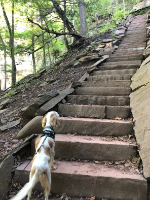 dog going up Staircase to upper Kaaterskill waterfall, Catskill Mountains, New York