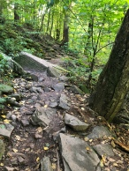 A rocky trail through the forest at Kaaterskill Falls, Catskill Mountains, New York