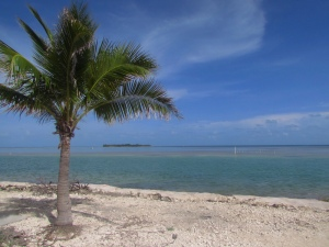 Atlantic Ocean, coral beach, plam tree in the Florida Keys