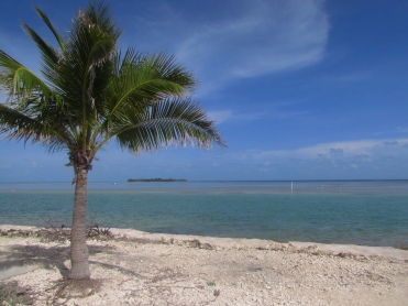 View of the Atlantic Ocean from beach with palm tree in Florida Keys
