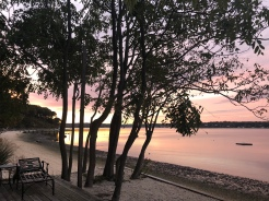 view of pastel sunrise through the trees on the beach in Northport, New York