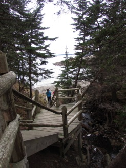 Wooden staircase through forest to rocky cove, Acadia National Park, Maine