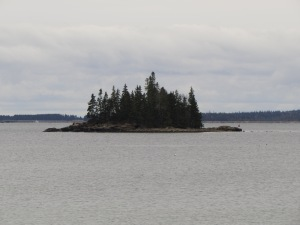 Tiny Island forest off the cost of Mount Desert Island, Maine