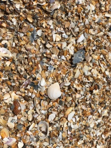 Beach covered walk of sea shells at Anastasia State park, Florida