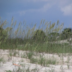 Sea Oats and Sand Dunes on the beach at Anastasia State Park, Florida