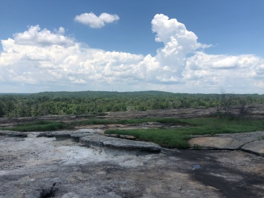 Granite outcrops on the summit of Arabia Mountain, Georgia, overlooking the forest