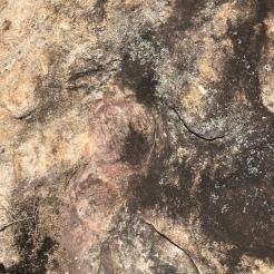 Discolored and swirled granite on Arabia Mountain, Georgia, migmatite