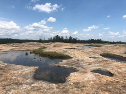 Vernal Pools on granite Arabia Mountain extending to the forest, Georgia