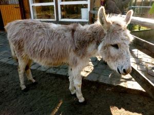 friendly donkey at petting zoo, Zoo Berlin, Germany