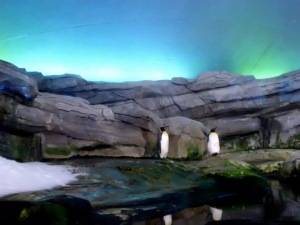 Antartic Penguin enclosure at Zoo Berlin, Garmany