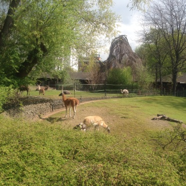open zoo enclosure at Zoo Berlin, Germany