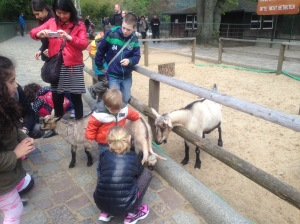 feeding the goats at Zoo Berlin petting zoo, Germany