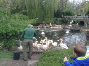Feeding time at the zoo, birds, Berlin, Germany