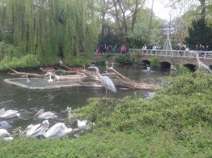 Free raoming birds at Zoo Berlin, Germany