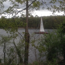 View through the forest of a sailboat on the Havel River at Pfaueninsel, Peacock Island, Germany