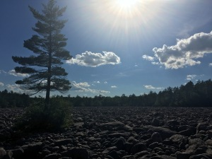 boulder field and forest against the setting sun at Hickory Run State Park, Pennsylvania