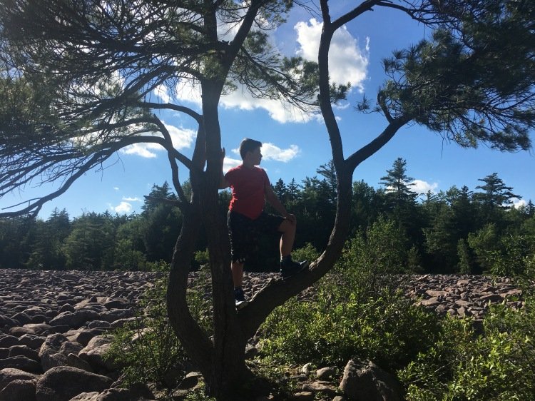 Boy on a climbed tree in the boulder field at Hickory Run State Park, Pennsylvania