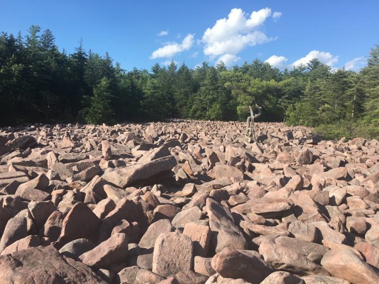 View of the boulder field at the forest edge at Hickory Run State Park, Pennsylvania