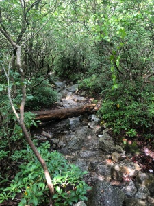 Forest stream along Millbrook Path, Minnewaska Preserve, New York