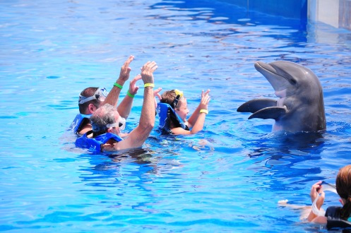 swimmers learning tricks with dolphin in oceanarium, Marineland, Florida