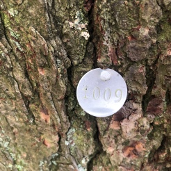 Tree tag at Lake Minnewaska Preserve, New York