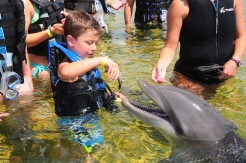 boy feeding a fish to bottlenose dolphin, Marineland, Florida
