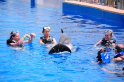 dolphin tricks with swimmers at Marineland, Florida