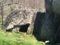 Black Bear Den, Grandfather Mountain, Wildlife Habitat, North Carolina