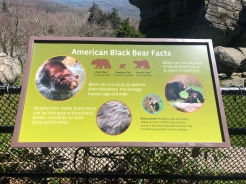 American Black Bear Facts, Grandfather Mountain, Wildlife Habitat, North Carolina