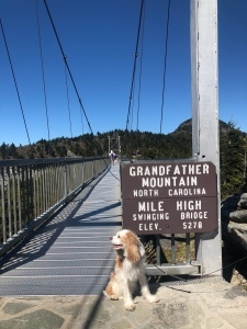 dog at sign Grandfather Mountain Mile High Swinging Bridge, North Carolina