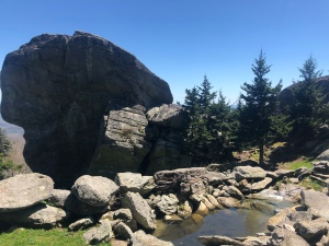 American Black Bear Wildlife Habitat, Grandfather Mountain, North Carolina