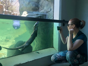 Woman photographing river otter swimming, Gradnfather Mountain Wildlife Habitat, North Carolina